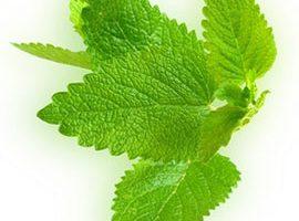 Poziv na predavanje o uzgoju ljekovitog bilja