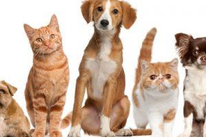 Odluka o pravilnom držanju životinja na području Općine Kalnik