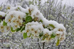 Obavijest o prijavi štete nastale uslijed prirodne nepogode – mraza